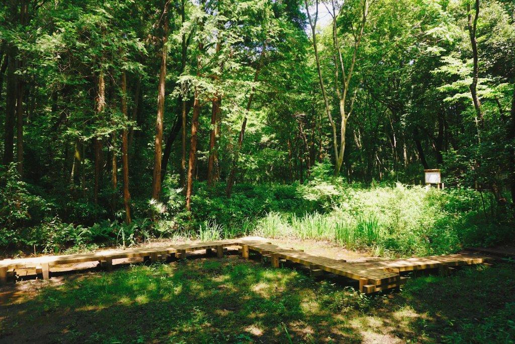 Grande vegetação com arvores e um lago no parque de Sayama Hills